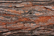 Close Up Tree Bark Detail