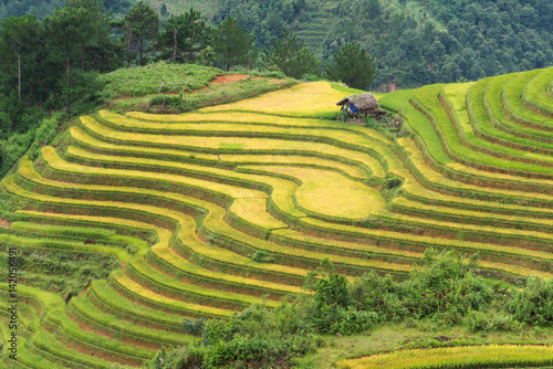 Garden Poster Rice fields Beautiful landscape rice fields on terraced of Mu Cang Chai