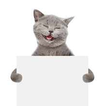 Smiling Cat Holding A White Ba...