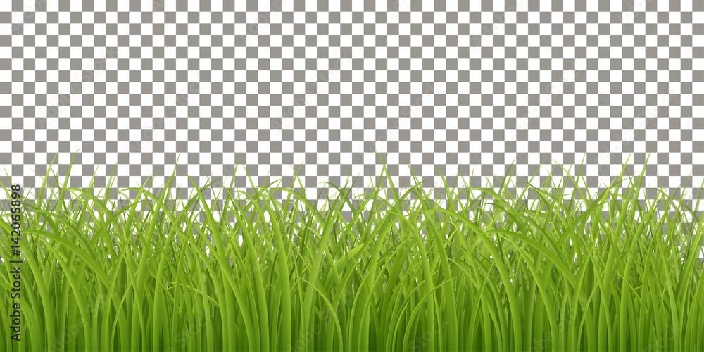 Fototapety, obrazy: Isolated Fresh Green Grass