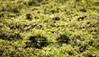Moos bedeckt Boden, Natur, Pflanzen