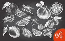 Ink Hand Drawn Set Of Different Kinds Of Citrus Fruits. Food Elements Collection For Design, Vector Illustration.