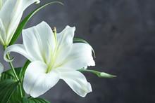 Beautiful White Lilies On Dark...