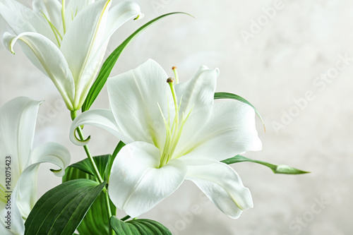 Stampa su Tela  Beautiful white lilies on light background, closeup
