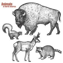 Animals Of North America Set.