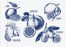 Ink Hand Drawn Set Of Different Kinds Of Citrus Fruits - Lime, Lemon, Tangerine, Grapefruit, Kumquat. Food Elements Collection For Design, Vector Illustration.