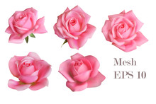 5 Mesh Pink Roses