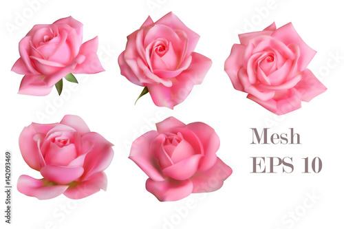 Obraz na płótnie 5 mesh pink roses