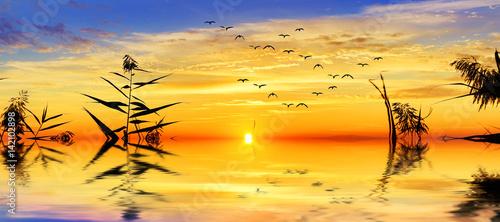 Poster Melon puesta de sol panoramica