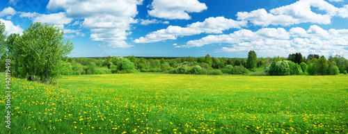 Fotobehang Cultuur Field with yellow dandelions and blue sky