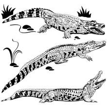 Silhouettes Of Crocodiles