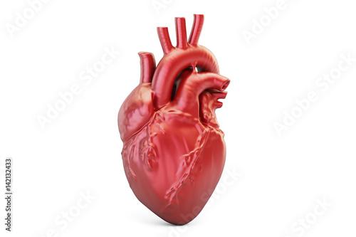 Fotografía  Human heart, 3D rendering