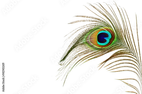 Foto op Aluminium Pauw peacock feathers in white background with text copy space