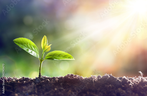 Foto op Canvas Planten Young Plant Growing In Sunlight