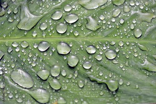 krople-deszczu-swiecace-na-zielony-lisc