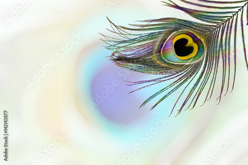 Foto op Plexiglas Pauw peacock feathers in blurs background with text copy space