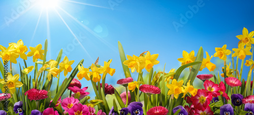 Obraz Spring flower - fototapety do salonu