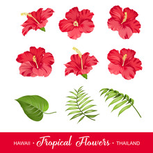Set Of Tropical Flowers Elements. Collection Of Hibiscus Flowers On A White Background. Vector Illustration Bundle.