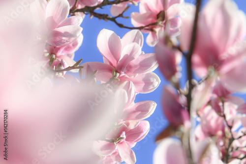 Obrazy wieloczęściowe magnolie