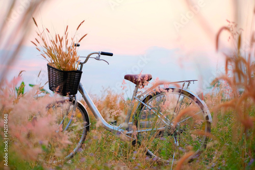 Papiers peints Velo Beautiful landscape image with bicycle at sunset. Bicycle parking at garden. Sweet and vintage background. Bicycle vintage
