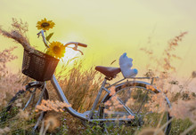 Sunflower In Bicycle Basket In...
