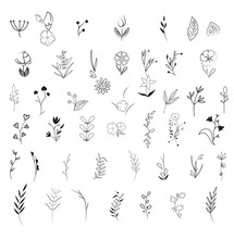 Bigset Of Floral Element Vector Illustration Isolated On White