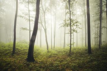 Obraz green vegetation in forest on rainy summer day