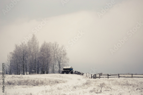 Poster Gris Lonely snow-covered trees in the field. Mainly cloudy