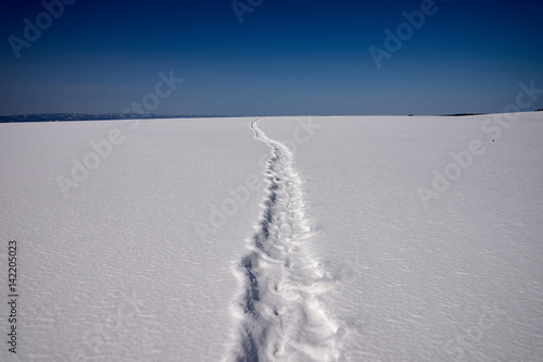 Fotografie, Obraz  雪原につづくスノーシューの足跡