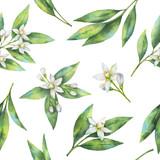 Akwarela pomarańczowy owocowy wzór kwiatów i liści na białym tle. - 142205842