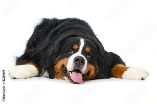 Fotografia, Obraz  Erschöpfter Hund