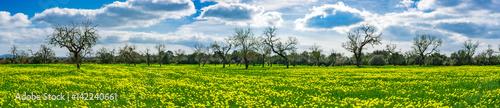 wiosenna-sceneria-widok-na-zielona-lake-i-drzewa-w-pogodny-dzien