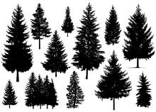 Set. Silhouette Of Pine Trees.