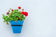 Blue Pot With Flower On White ...