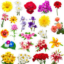 Collection Of Beautiful Colorful Flowers