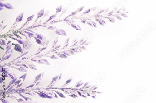Valokuva  lavender flowers branch