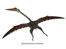Quetzalcoatlus Flying Reptile With Font -The Carnivorous Quetzalcoatlus Was A Flying Pterosaur Reptile That Lived In North America In The Cretaceous Period.