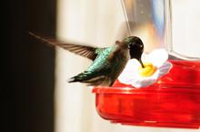 Hummingbird At Feeder