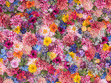 Fototapeta Kwiaty - Multi-colored flower wall background