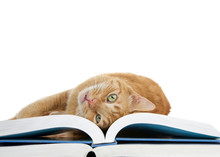 Close Up Of One Orange Ginger Tabby Cat Laying On A Large Book Rolling Over Upside Down Looking At Viewer. Isolated On White Background.
