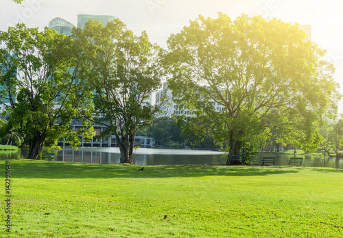 Garden Poster Forest Beautiful Public green park at Vachirabenjatas Park (Rot Fai Park) Bangkok, Thailand