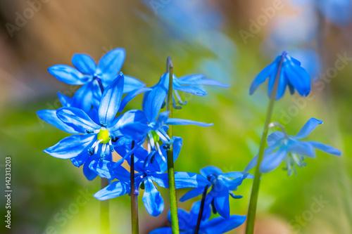 Fototapeta closeup spring flowers in a forest obraz na płótnie