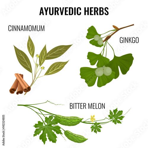 Ayurvedic herbs set of plant branches isolated on white. Fototapeta