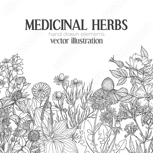 Photo  Card template with vintage sketches of medicinal herbs and flowers