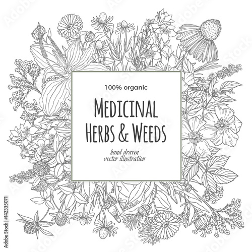 Photo  Square banner for text with medicinal flowers and herbs on the white background