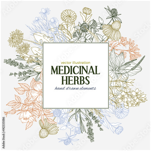 Square text field with hand-drawn colored medicinal herbs and flowers Wallpaper Mural