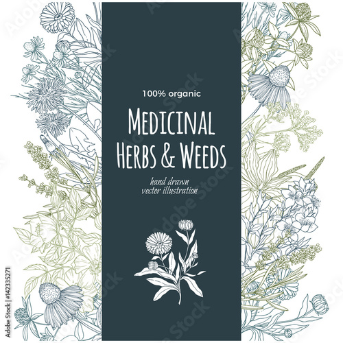 Photo  vertical turquoise banner with color medicinal herbs and flowers