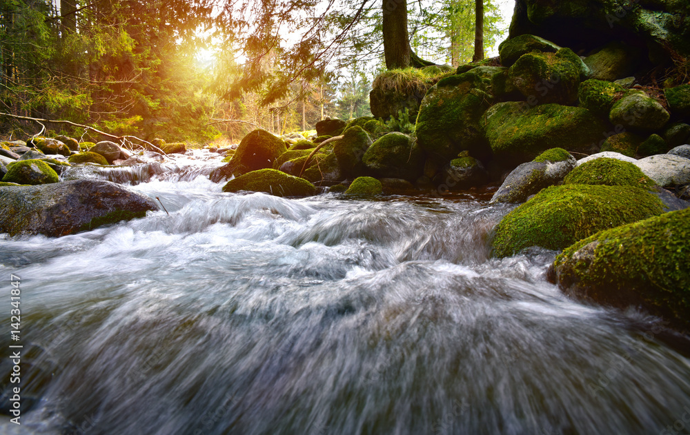Fototapety, obrazy: Forest brook in the Tatra mountain forest