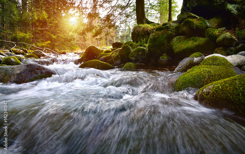 Fotomural Forest brook in the Tatra mountain forest