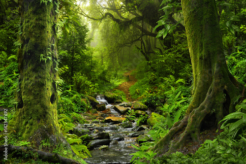 Tuinposter Weg in bos Deep tropical jungles of Southeast Asia in august